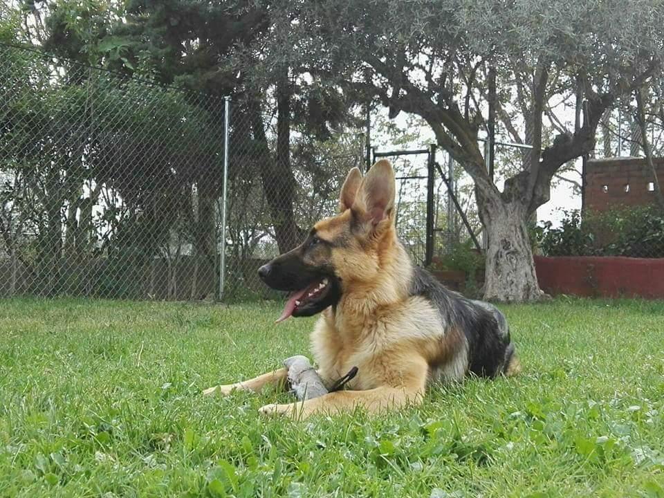Residencia Canina Clientes 7