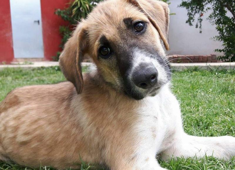 Residencia Canina Clientes