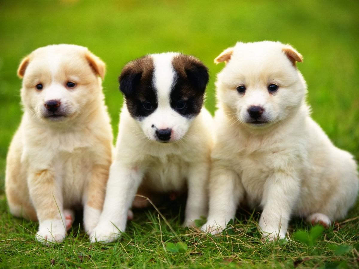 imagenes-de-perritos-6